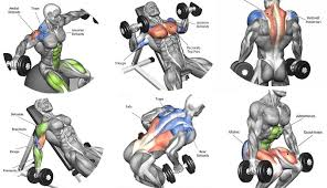 Home Dumbbell Workouts
